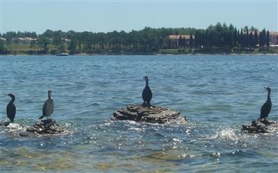 Море возле лагеря в Хорватии